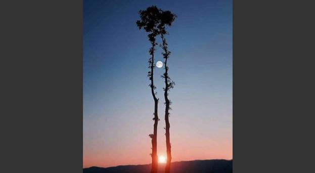 foto fake bufala sole luna